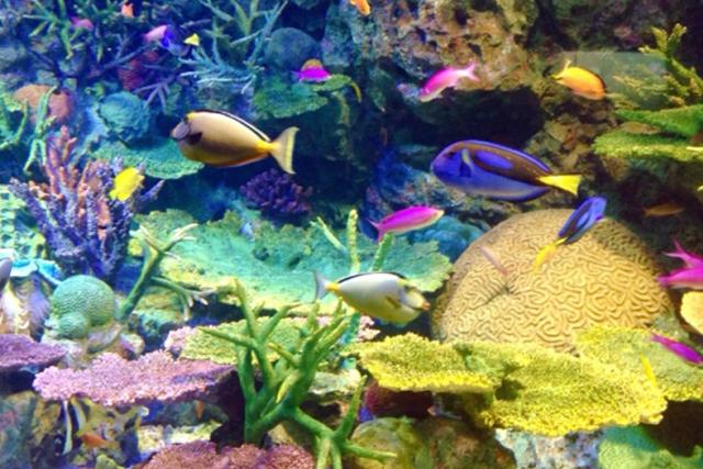 ソラマチの水族館の営業時間は?混雑状況や休日・平日の穴場な日も紹介